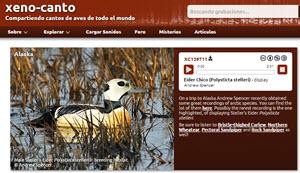 Xeno-Canto - una web para los aficionados de las aves con 225 mil archivos de audio